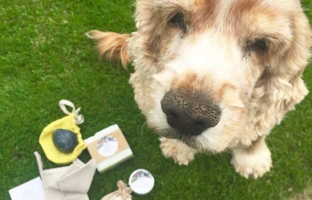 Spoiling your Dog Ethically and Luxuriously