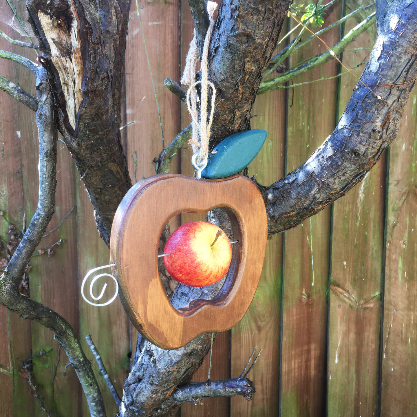 Eco apple bird feeder hanging from a tree branch