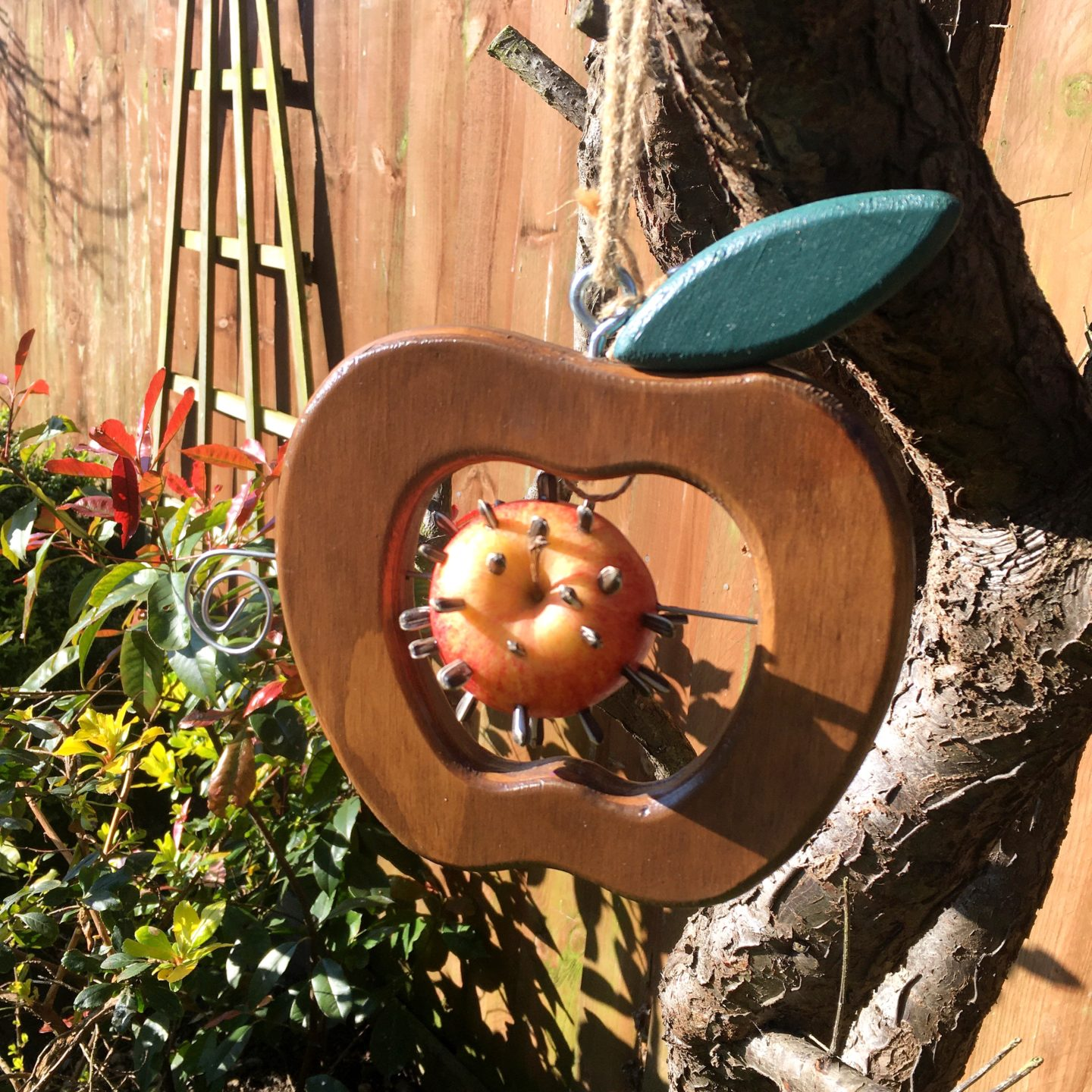 Eco apple bird feeder with sunflower seeds poked in hanging from a tree