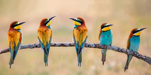 Gifts for Bird Lovers (and ways to get them in your garden!)